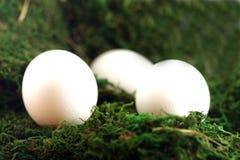 Uova di Pasqua In erba Immagine Stock Libera da Diritti