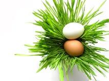 Uova di Pasqua In erba su bianco Immagine Stock