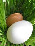 Uova di Pasqua In erba verde Fotografia Stock Libera da Diritti