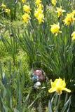 Uova di Pasqua Nascoste per la caccia. Fotografia Stock Libera da Diritti