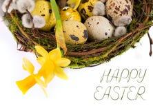 Uova di Pasqua nel nido con il narciso Fotografie Stock
