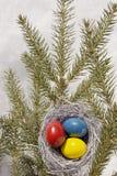 Uova di Pasqua In nido. Fotografia Stock Libera da Diritti