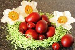 Uova di Pasqua rosse con i fiori Fotografie Stock