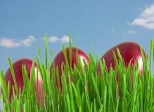 Uova di Pasqua rosse in erba verde sotto cielo blu Immagine Stock