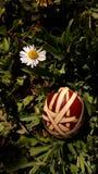 Uova di Pasqua Su erba Immagine Stock