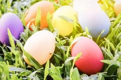 Uova di Pasqua su fienarola dei prati verde Fotografia Stock
