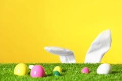 Uova di Pasqua su prato inglese verde ed orecchie divertenti del coniglietto contro il fondo di colore fotografia stock libera da diritti