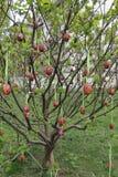 Uova di Pasqua Sull'albero Fotografia Stock Libera da Diritti