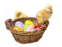 Uova di Pasqua In un canestro ed in polli Immagini Stock