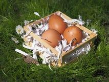 Uova di Pasqua in un canestro sull'erba immagini stock libere da diritti