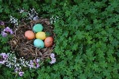 Uova di Pasqua In un nido con il trifoglio verde Immagine Stock