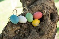 Uova di Pasqua variopinte decorative su cordicella in cavità dell'albero, concetto di festa Fotografie Stock Libere da Diritti