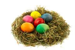 Uova di Pasqua variopinte del nido Fotografia Stock Libera da Diritti