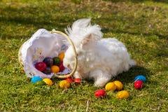 Uova di Pasqua variopinte dentro il vimine della paglia, su paglia Immagine Stock Libera da Diritti