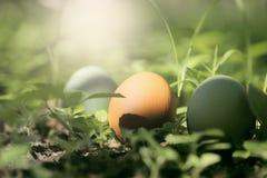 Uova di Pasqua variopinte in natura Immagini Stock Libere da Diritti