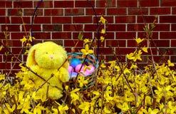 Uova di Pasqua variopinte in nido sul prato Immagine Stock Libera da Diritti