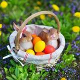Uova di Pasqua Variopinte in un cestino Fotografia Stock Libera da Diritti