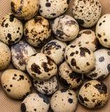 Uova di quaglia chiazzate come fondo dell'alimento Fotografia Stock