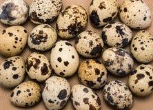 Uova di quaglia chiazzate come fondo dell'alimento Fotografia Stock Libera da Diritti