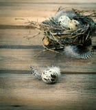 Uova di quaglia con la piuma Fotografia Stock