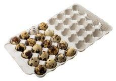 Uova di quaglia in contenitore di cartone Immagini Stock Libere da Diritti