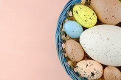 Uova di quaglia di Pasqua in un canestro su un pallido - fondo rosa Fotografia Stock