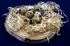Uova di quaglia dietetiche dal nido Fotografie Stock Libere da Diritti