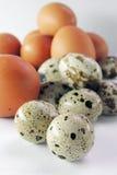 Uova di quaglia e del pollo Immagini Stock