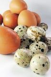 Uova di quaglia e del pollo Fotografia Stock