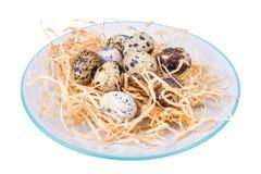 Uova di quaglia fresche e eterogenee come simbolo delle vacanze di Pasqua fotografia stock libera da diritti