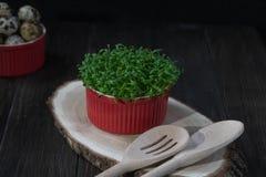 Uova di quaglia, insalata fresca del crescione Concetto sano dell'alimento fotografia stock