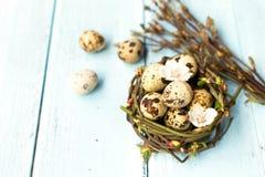 Uova di quaglia nel nido Immagine Stock Libera da Diritti