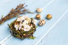 Uova di quaglia nel nido Fotografia Stock