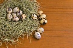 Uova di quaglia nel nido verde su struttura di legno Fotografia Stock Libera da Diritti