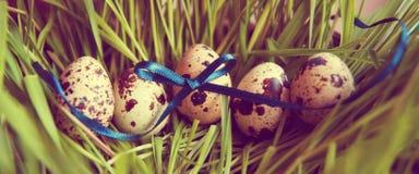 Uova di quaglia di Pasqua nell'erba Fotografie Stock