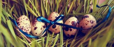 Uova di quaglia di Pasqua nell'erba Fotografia Stock Libera da Diritti