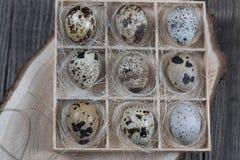 Uova di quaglia in scatola di legno su fondo scuro fotografia stock libera da diritti