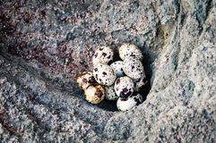 Uova di quaglia sulla pietra immagini stock libere da diritti