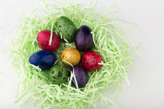 Uova di quaglia tinte in un nido Fotografia Stock