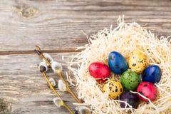Uova di quaglia tinte in un nido su fondo di legno Fotografie Stock Libere da Diritti