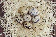 Uova di quaglia in un nido della paglia Immagini Stock