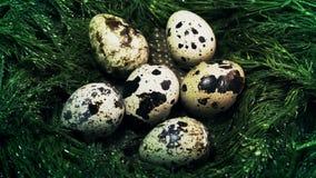 Uova di quaglia in un nido di erba stock footage