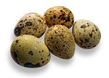 Uova di quaglie. Immagini Stock