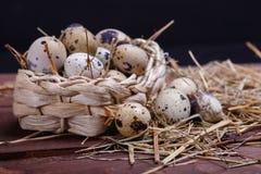 Uova di quaglie Immagine Stock