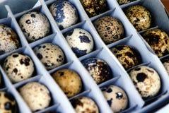 Uova di quaglie fotografia stock libera da diritti