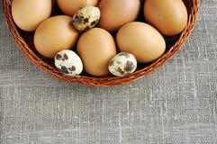 Uova di quaglie e della gallina in un cestino, copyspace per testo Fotografia Stock
