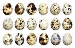 Uova di quaglie isolate Grande raccolta delle uova di quaglia isolate su fondo bianco con il percorso di ritaglio Fotografie Stock