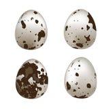 Uova di quaglie isolate Insieme di vettore delle uova di quaglia isolate su fondo bianco Fotografie Stock