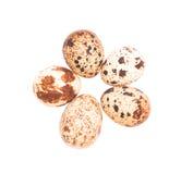 Uova di quaglie isolate su bianco Fotografia Stock Libera da Diritti