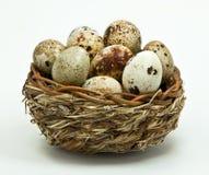 Uova di quaglie nel cestino Fotografia Stock